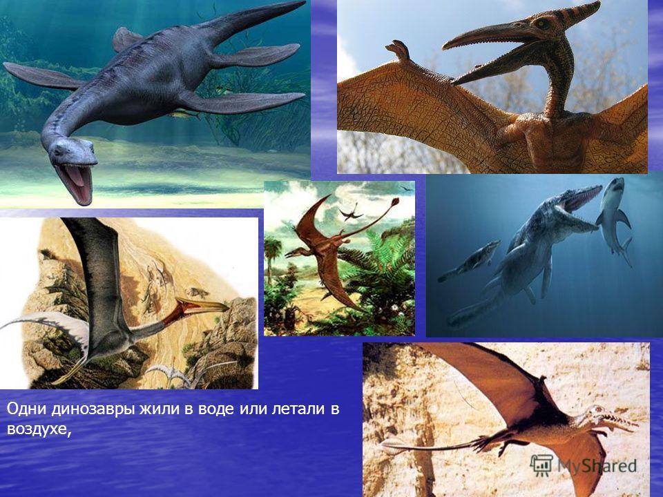 Одни динозавры жили в воде или летали в воздухе,