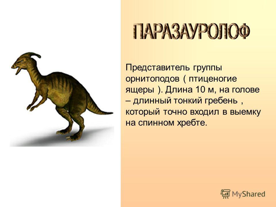 Опасный хищник. Высота 5 м, длина 14 м. Метровый череп приплюснут сверху и с боков. Задние ноги очень мощные. Ширина и длина ступни 80 см, длина шага 4 м.