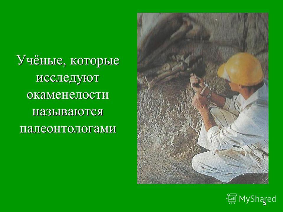5 Учёные, которые исследуют окаменелости называются палеонтологами Учёные, которые исследуют окаменелости называются палеонтологами