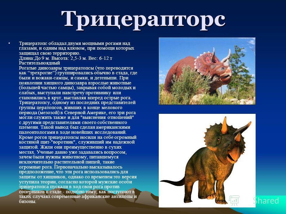 Трицерапторс Трицератопс обладал двумя мощными рогами над глазами, и одним над клювом, при помощи которых защищал свою территорию. Длина:До 9 м. Высота: 2,5-3 м. Вес: 6-12 т Растительноядный Рогатые динозавры трицератопсы (что переводится как трехрог