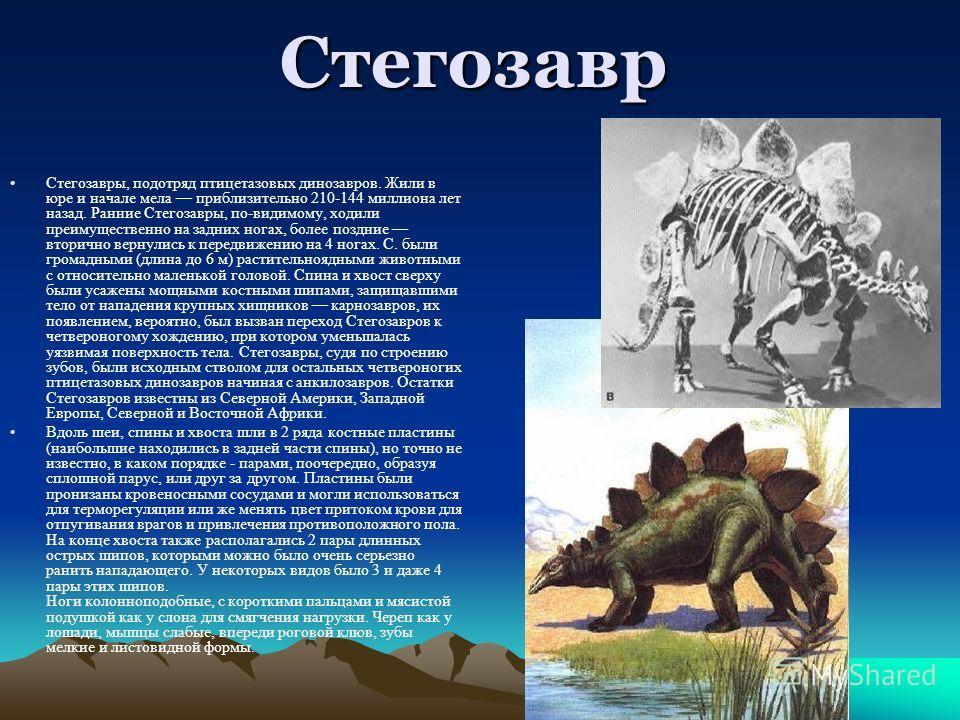 Стегозавр Стегозавры, подотряд птицетазовых динозавров. Жили в юре и начале мела приблизительно 210-144 миллиона лет назад. Ранние Стегозавры, по-видимому, ходили преимущественно на задних ногах, более поздние вторично вернулись к передвижению на 4 н