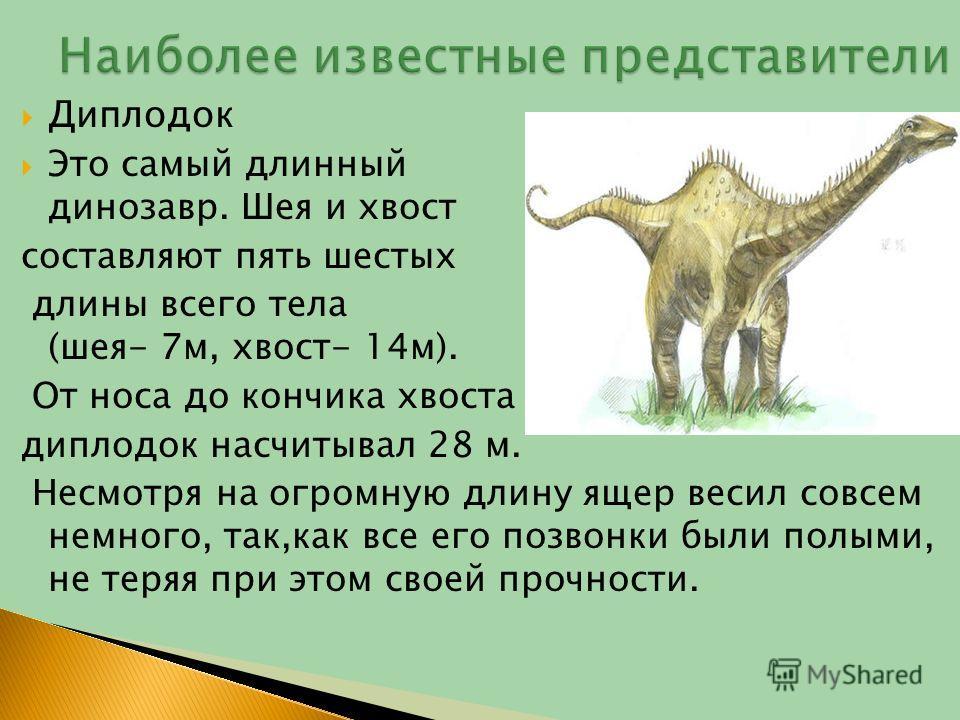 Диплодок Это самый длинный динозавр. Шея и хвост составляют пять шестых длины всего тела (шея- 7 м, хвост- 14 м). От носа до кончика хвоста диплодок насчитывал 28 м. Несмотря на огромную длину ящер весил совсем немного, так,как все его позвонки были