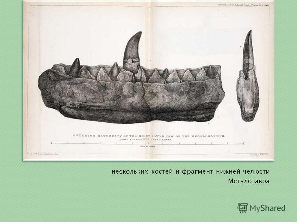 нескольких костей и фрагмент нижней челюсти Мегалозавра