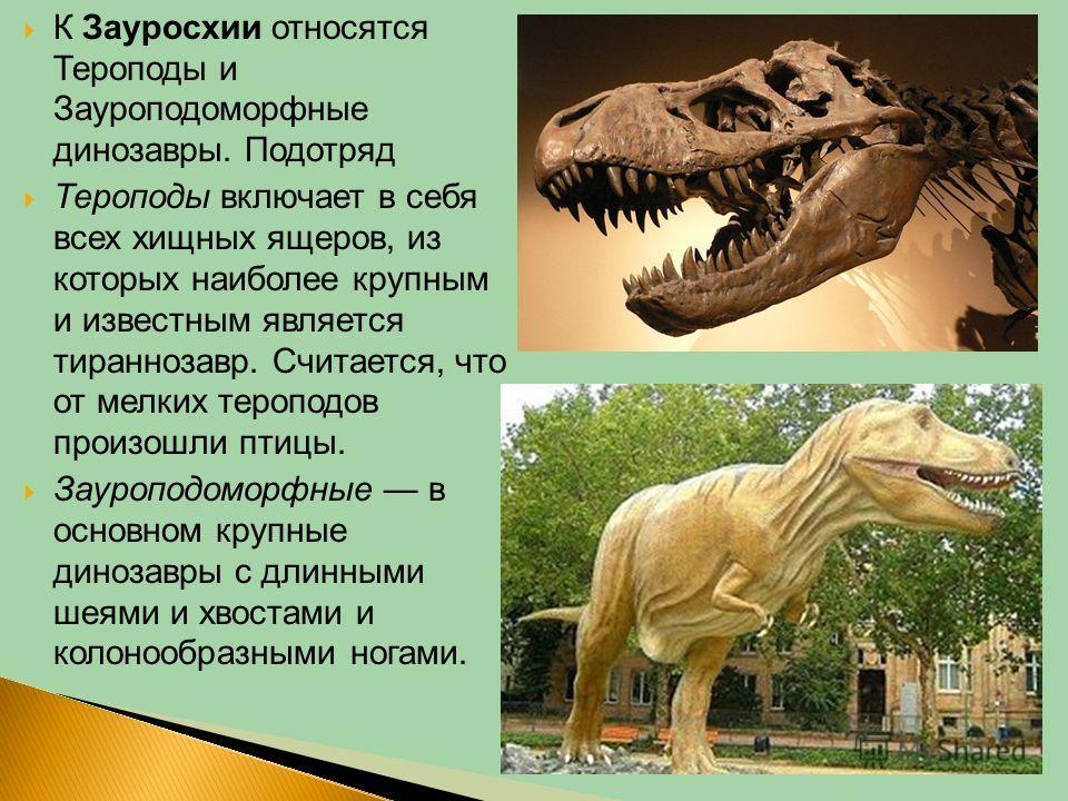 К Зауросхии относятся Тероподы и Зауроподоморфные динозавры. Подотряд Тероподы включает в себя всех хищных ящеров, из которых наиболее крупным и известным является тираннозавр. Считается, что от мелких тероподов произошли птицы. Зауроподоморфные в ос