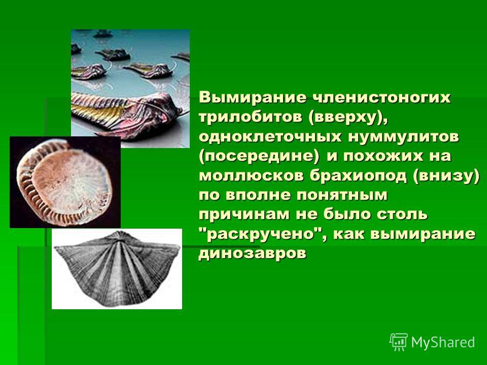 Вымирание членистоногих трилобитов (вверху), одноклеточных нуммулитов (посередине) и похожих на моллюсков брахиопод (внизу) по вполне понятным причинам не было столь раскручено, как вымирание динозавров