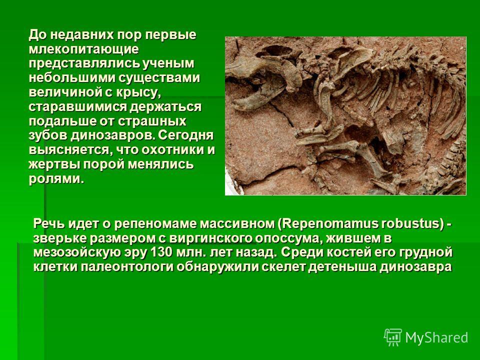 До недавних пор первые млекопитающие представлялись ученым небольшими существами величиной с крысу, старавшимися держаться подальше от страшных зубов динозавров. Сегодня выясняется, что охотники и жертвы порой менялись ролями. До недавних пор первые