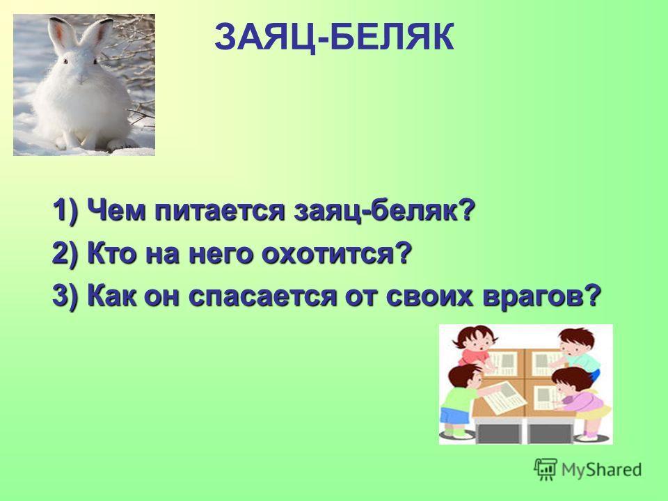 ЗАЯЦ-БЕЛЯК 1) Чем питается заяц-беляк? 2) Кто на него охотится? 3) Как он спасается от своих врагов?