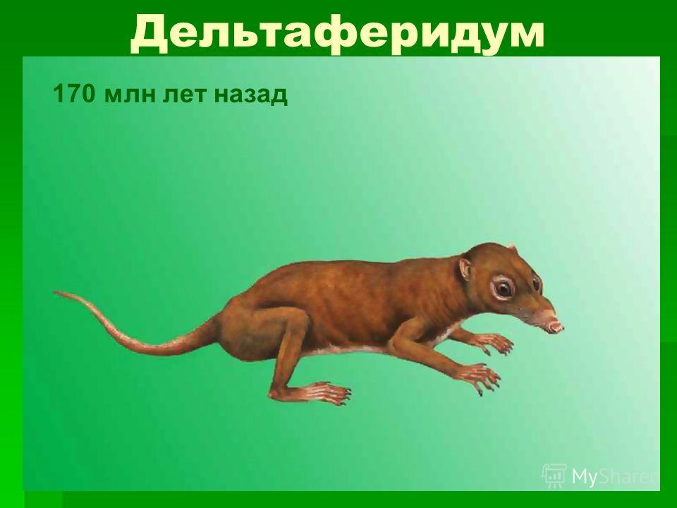 Дельтаферидум 170 млн лет назад