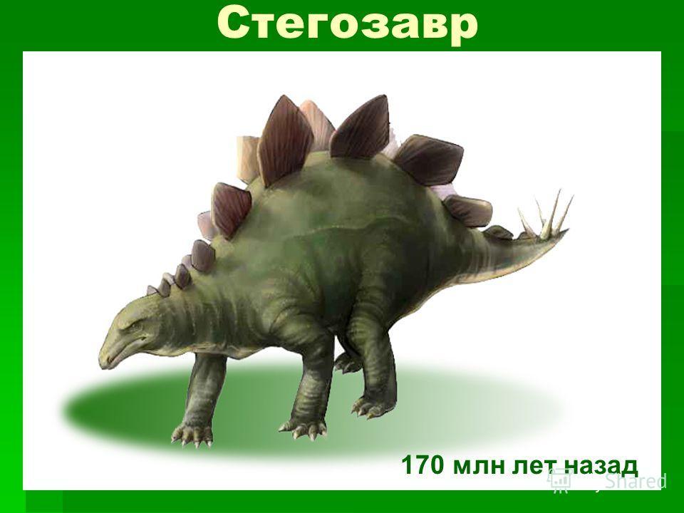 Стегозавр 170 млн лет назад