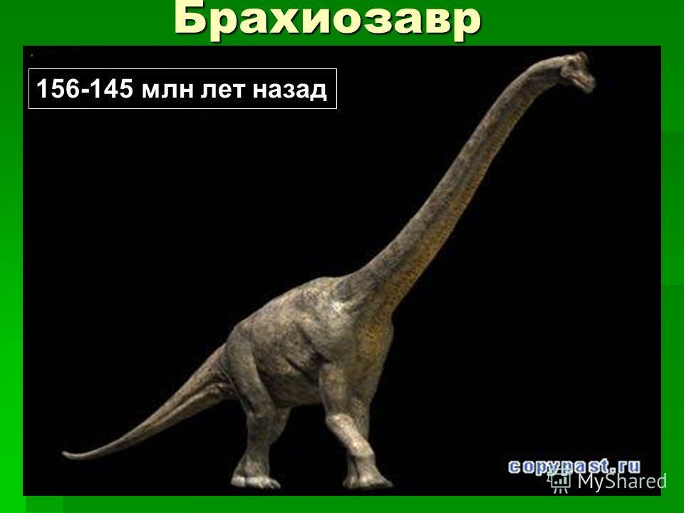 Брахиозавр 156-145 млн лет назад