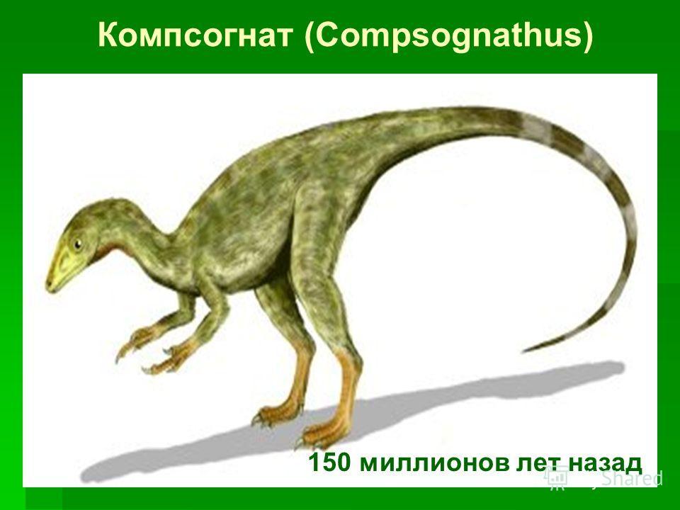 Компсогнат (Compsognathus) 150 миллионов лет назад
