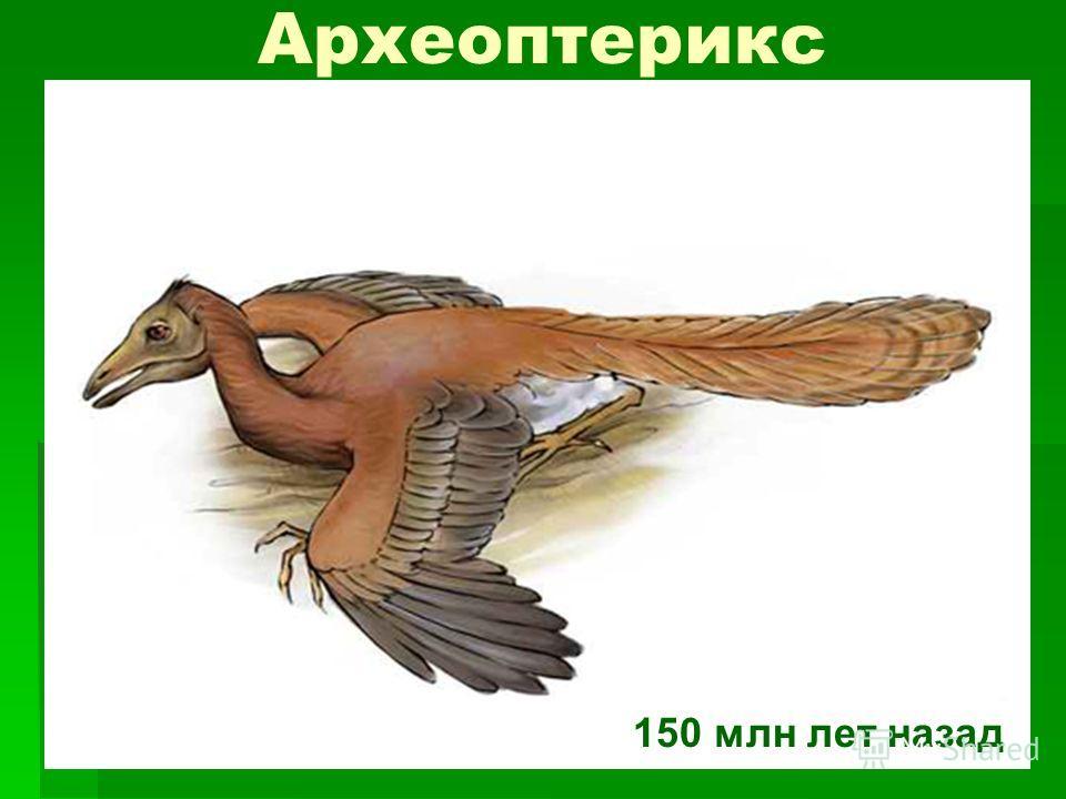 Археоптерикс 150 млн лет назад