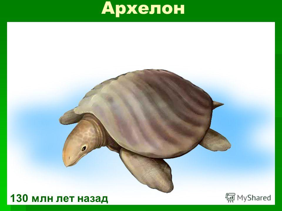 Архелон 130 млн лет назад