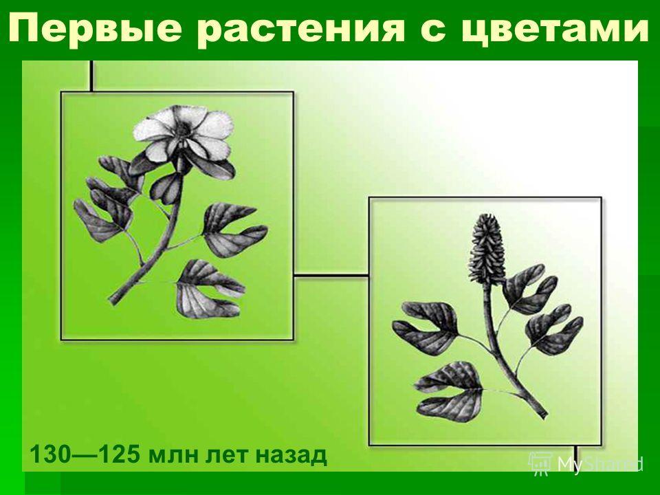 Первые растения с цветами 130125 млн лет назад