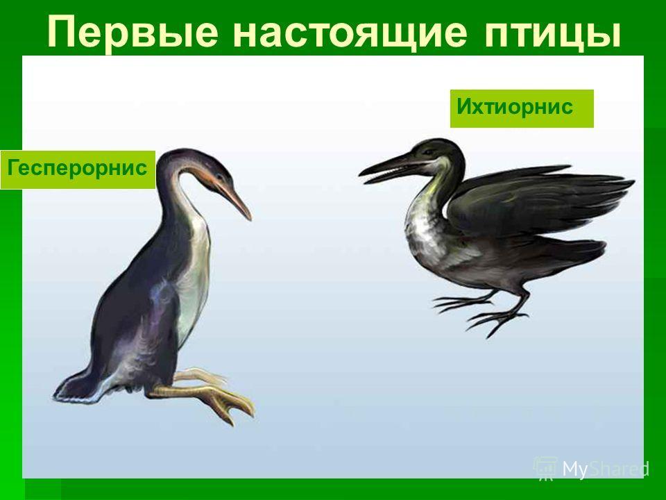 Гесперорнис Ихтиорнис Первые настоящие птицы