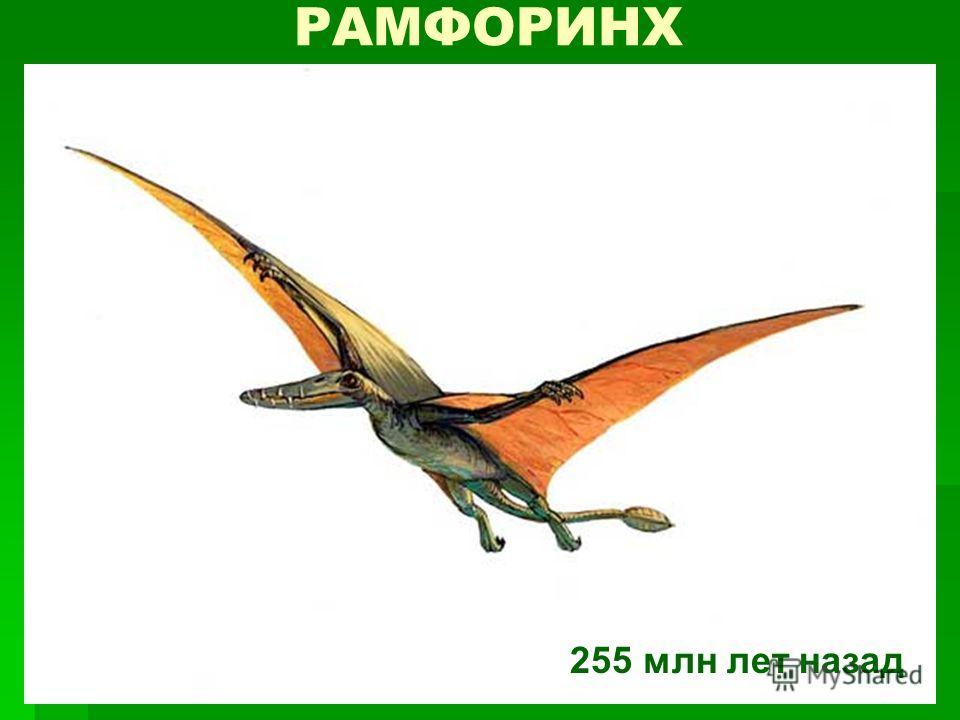 РАМФОРИНХ 255 млн лет назад