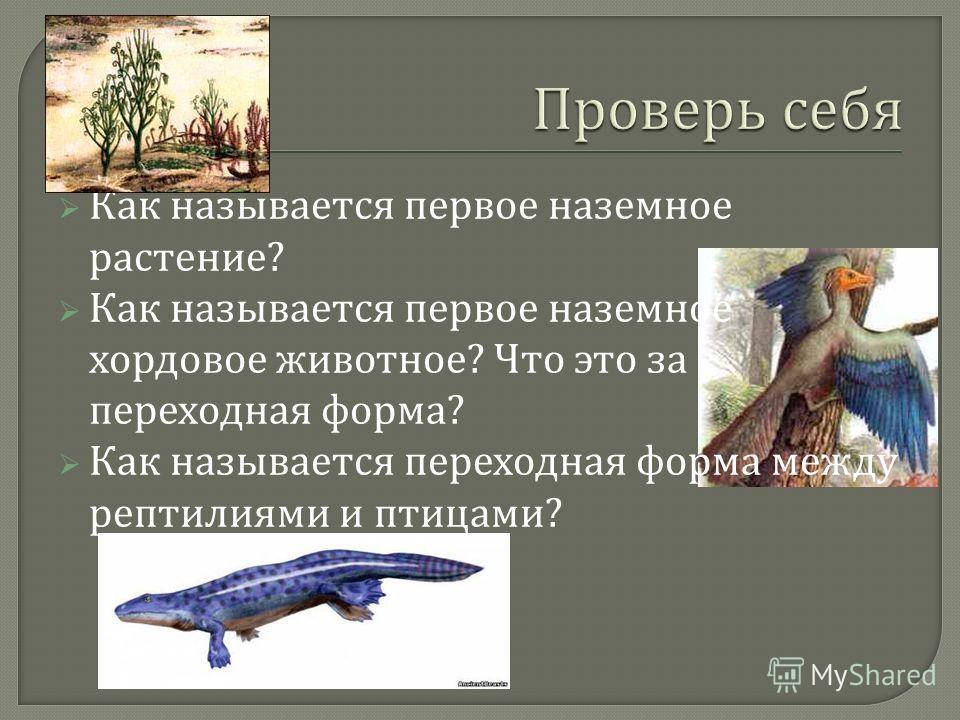 Как называется первое наземное растение ? Как называется первое наземное хордовое животное ? Что это за переходная форма ? Как называется переходная форма между рептилиями и птицами ?