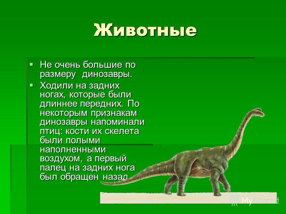 Животные Не очень большие по размеру динозавры. Не очень большие по размеру динозавры. Ходили на задних ногах, которые были длиннее передних. По некоторым признакам динозавры напоминали птиц: кости их скелета были полыми наполненными воздухом, а перв