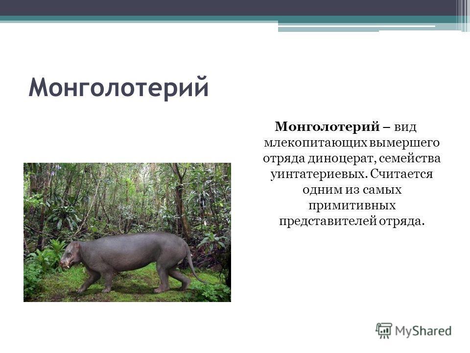 Монголотерий Монголотерий – вид млекопитающих вымершего отряда диноцерат, семейства уинтатериевых. Считается одним из самых примитивных представителей отряда.