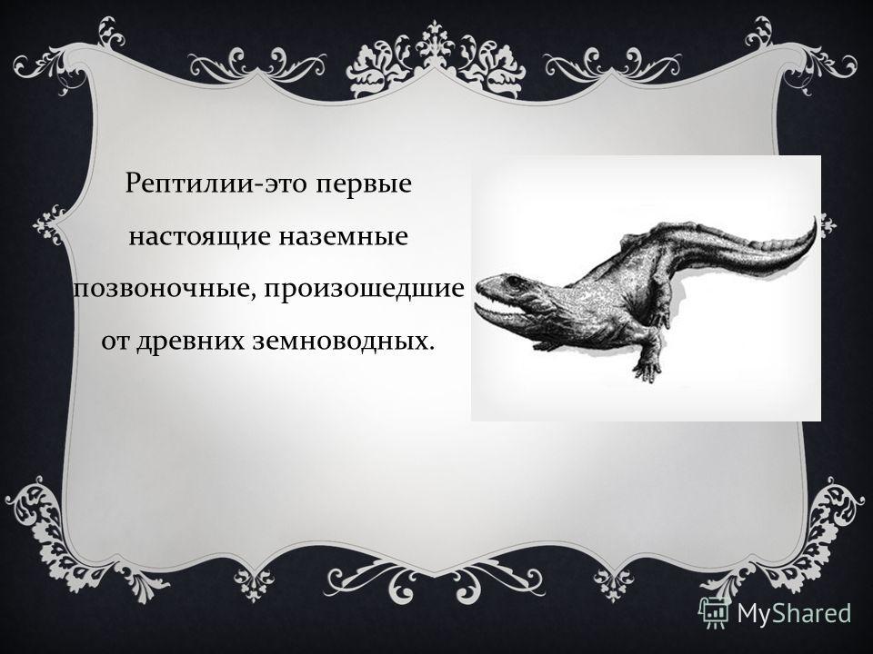 Рептилии - это первые настоящие наземные позвоночные, произошедшие от древних земноводных.