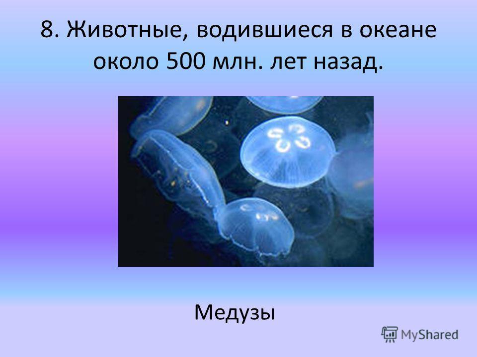 8. Животные, водившиеся в океане около 500 млн. лет назад. Медузы