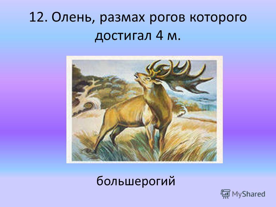 12. Олень, размах рогов которого достигал 4 м. большерогий