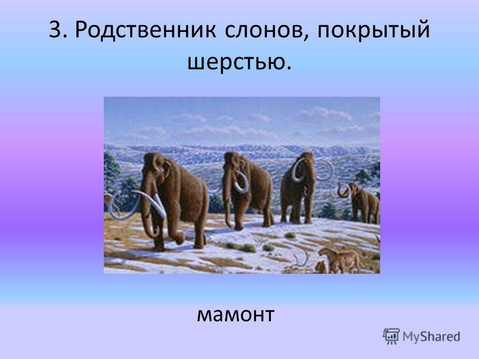 3. Родственник слонов, покрытый шерстью. мамонт