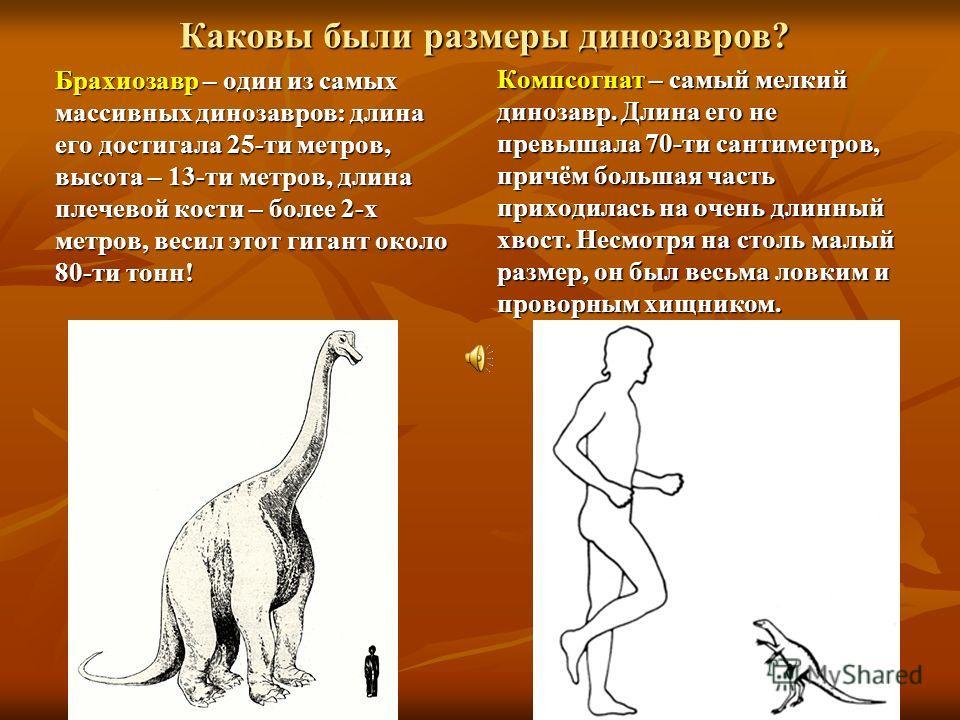 Каковы были размеры динозавров? Брахиозавр Брахиозавр – один из самых массивных динозавров: длина его достигала 25-ти метров, высота – 13-ти метров, длина плечевой кости – более 2-х метров, весил этот гигант около 80-ти тонн! Компсогнат Компсогнат –