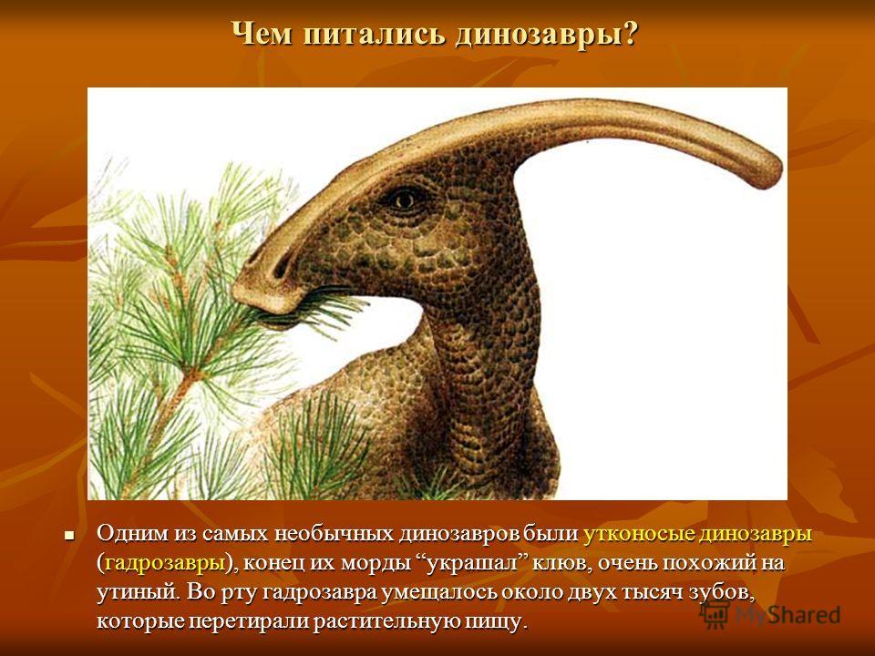 Чем питались динозавры? Одним из самых необычных динозавров были утконосые динозавры (гадрозавры), конец их морды украшал клюв, очень похожий на утиный. Во рту гадрозавра умещалось около двух тысяч зубов, которые перетирали растительную пищу. Одним и