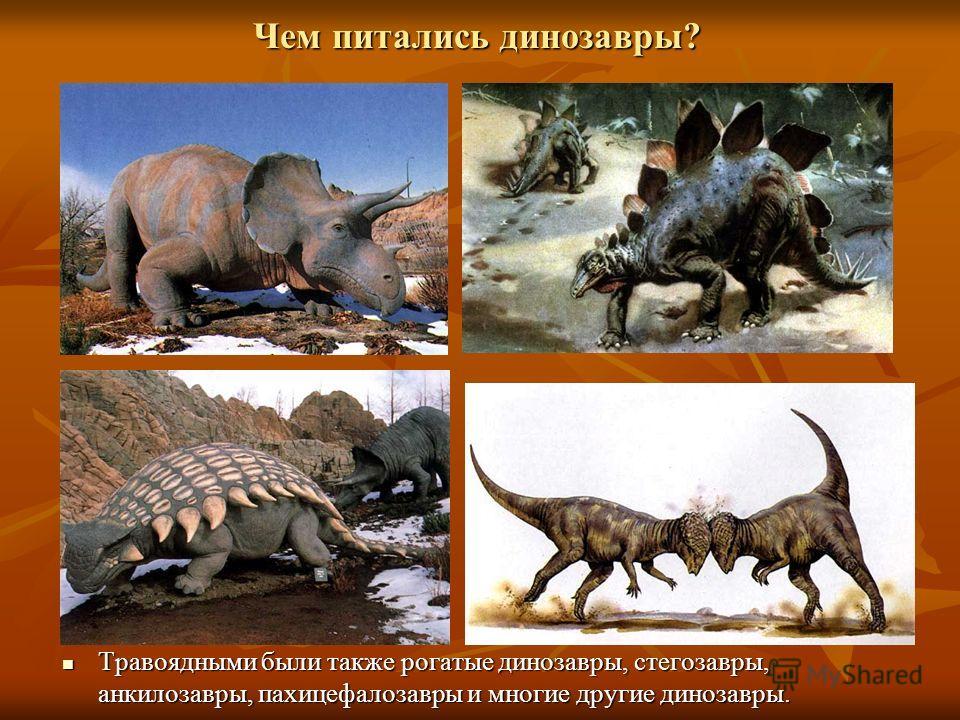 Чем питались динозавры? Травоядными были также рогатые динозавры, стегозавры, анкилозавры, пахицефалозавры и многие другие динозавры. Травоядными были также рогатые динозавры, стегозавры, анкилозавры, пахицефалозавры и многие другие динозавры.