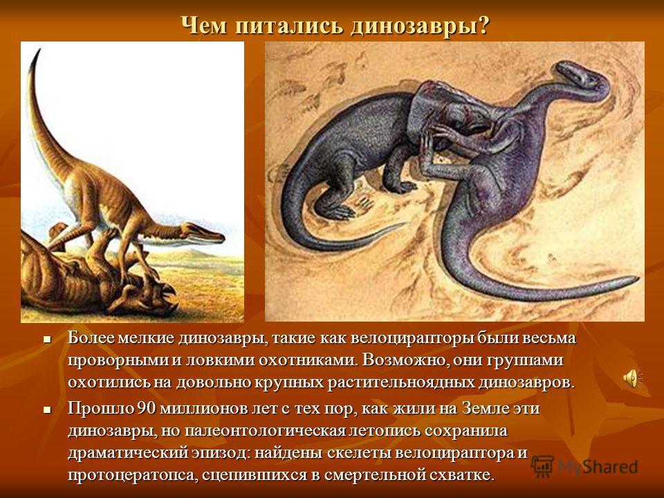 Чем питались динозавры? Более Более мелкие динозавры, такие как велоцирапторы были весьма проворными и ловкими охотниками. Возможно, они группами охотились на довольно крупных растительноядных динозавров. Прошло Прошло 90 миллионов лет с тех пор, как