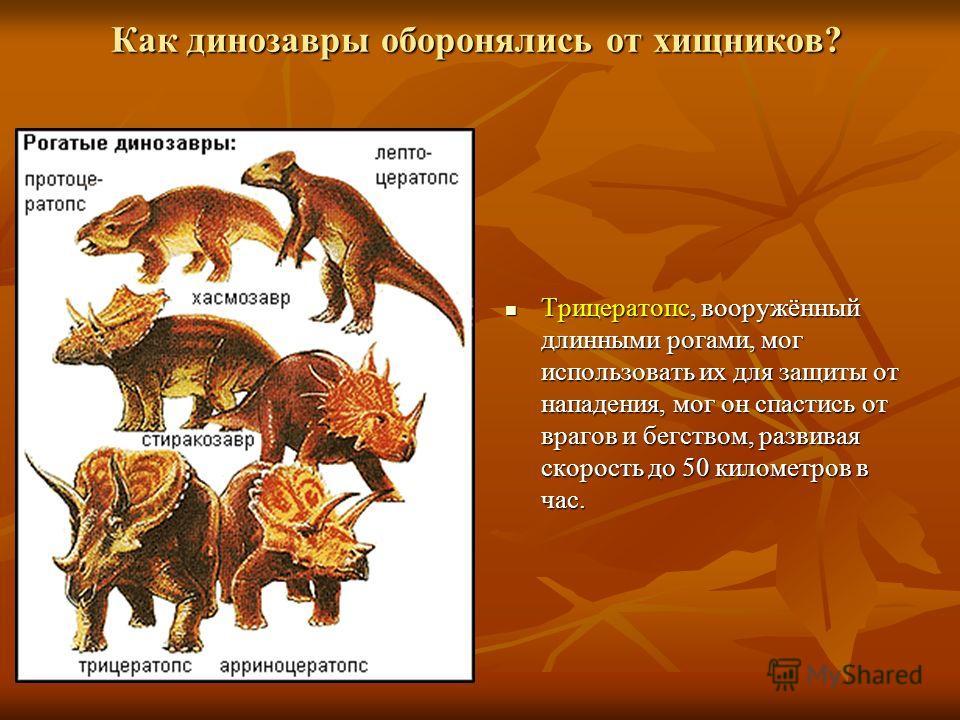 Как динозавры оборонялись от хищников? Трицератопс, вооружённый длинными рогами, мог использовать их для защиты от нападения, мог он спастись от врагов и бегством, развивая скорость до 50 километров в час. Трицератопс, вооружённый длинными рогами, мо