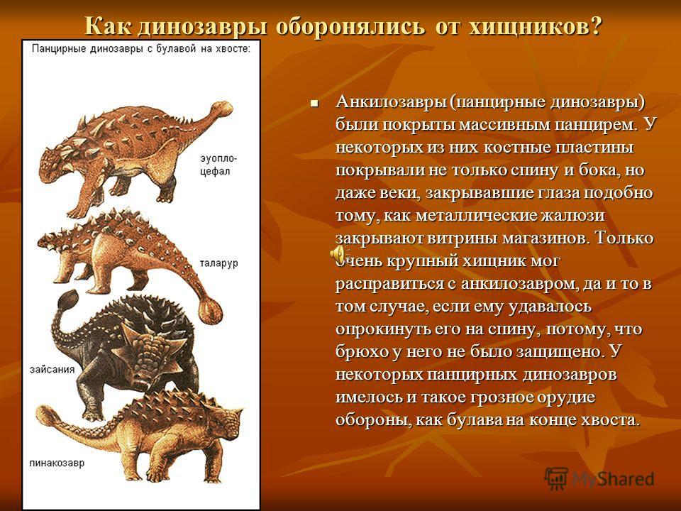 Как динозавры оборонялись от хищников? Анкилозавры Анкилозавры (панцирные динозавры) были покрыты массивным панцирем. У некоторых из них костные пластины покрывали не только спину и бока, но даже веки, закрывавшие глаза подобно тому, как металлически