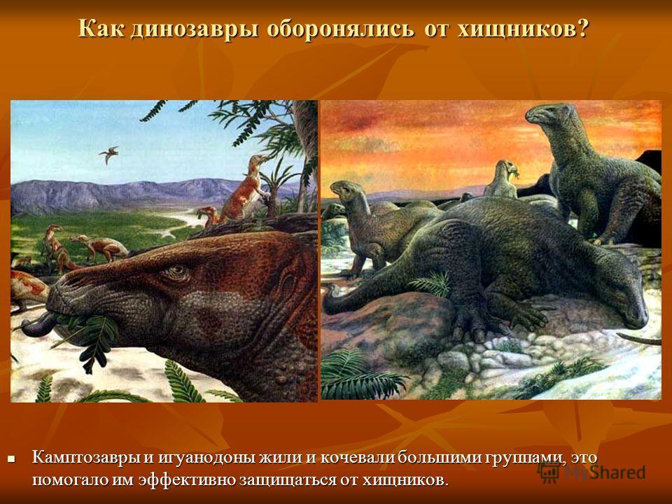 Как динозавры оборонялись от хищников? Камптозавры и игуанодоны жили и кочевали большими группами, это помогало им эффективно защищаться от хищников.