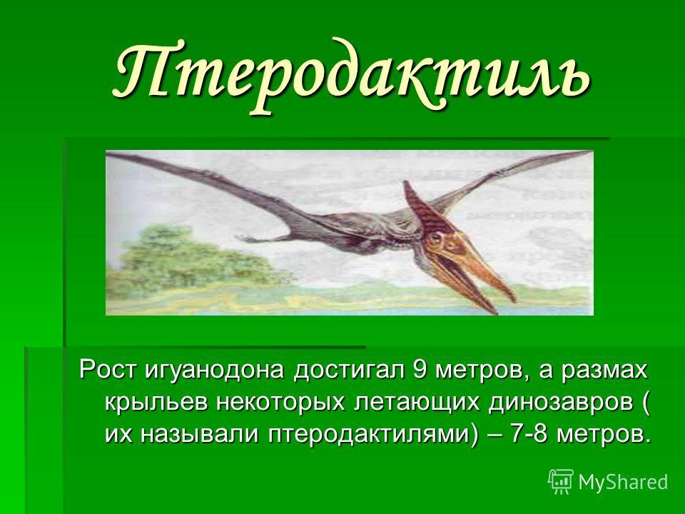 Птеродактиль Рост игуанодона достигал 9 метров, а размах крыльев некоторых летающих динозавров ( их называли птеродактилями) – 7-8 метров.