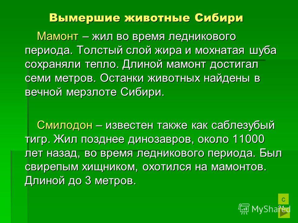 31 Вымершие животные Сибири Вымершие животные Сибири Мамонт – жил во время ледникового периода. Толстый слой жира и мохнатая шуба сохраняли тепло. Длиной мамонт достигал семи метров. Останки животных найдены в вечной мерзлоте Сибири. Смилодон – извес