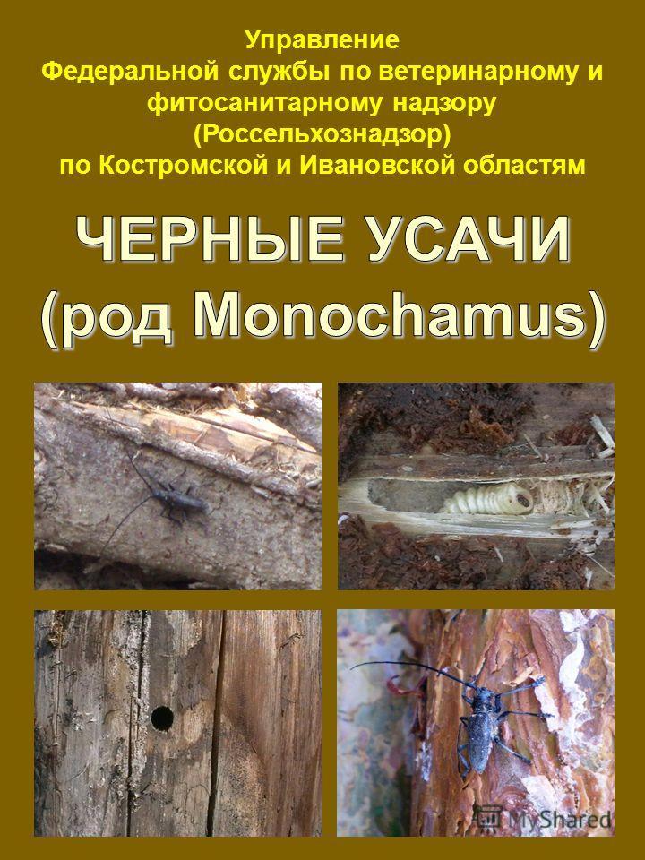 Управление Федеральной службы по ветеринарному и фитосанитарному надзору (Россельхознадзор) по Костромской и Ивановской областям