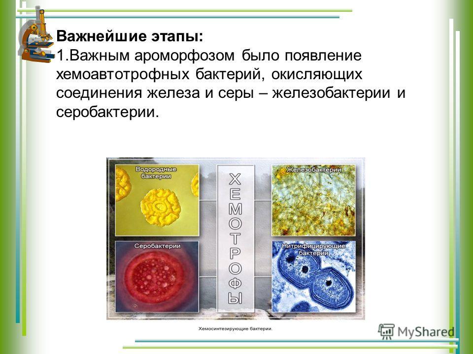 Важнейшие этапы: 1. Важным ароморфозом было появление хемоавтотрофных бактерий, окисляющих соединения железа и серы – железобактерии и серобактерии.