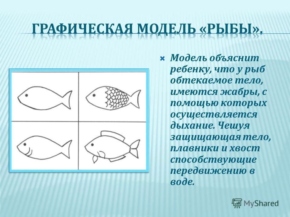 Модель объяснит ребенку, что у рыб обтекаемое тело, имеются жабры, с помощью которых осуществляется дыхание. Чешуя защищающая тело, плавники и хвост способствующие передвижению в воде.