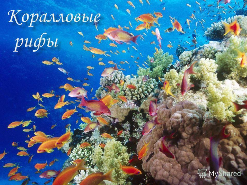 водная среда кораллов: