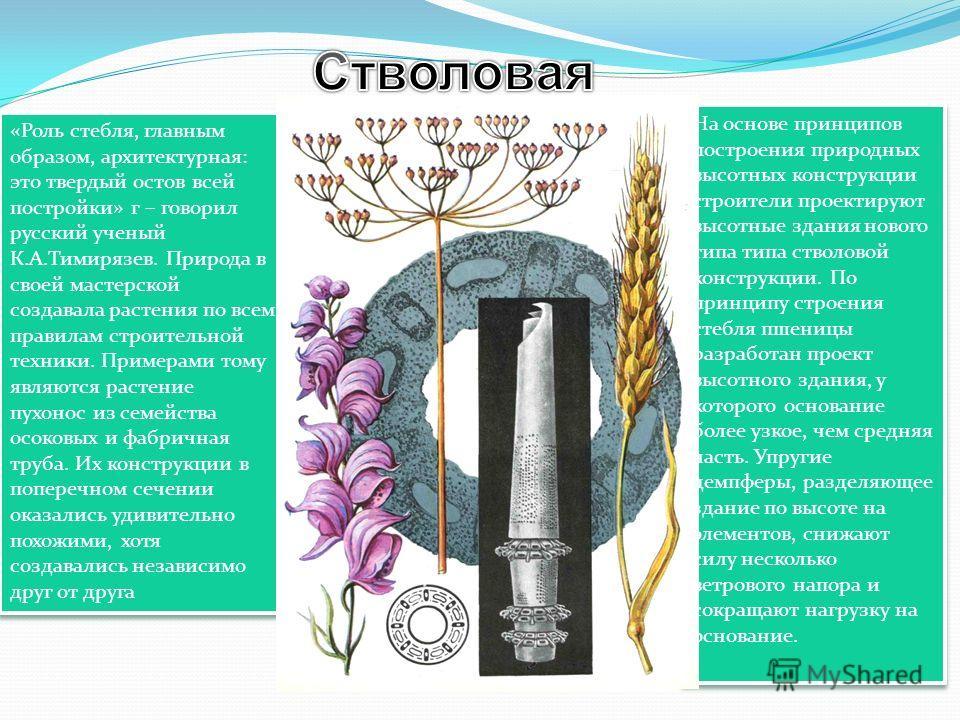 «Роль стебля, главным образом, архитектурная: это твердый остов всей постройки» г – говорил русский ученый К.А.Тимирязев. Природа в своей мастерской создавала растения по всем правилам строительной техники. Примерами тому являются растение пухонос из