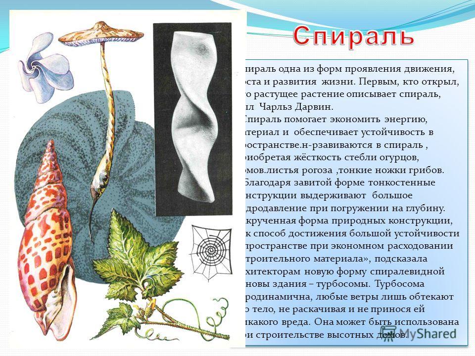 Спираль одна из форм проявления движения, роста и развития жизни. Первым, кто открыл, что растущее растение описывает спираль, был Чарльз Дарвин. Спираль помогает экономить энергию, материал и обеспечивает устойчивость в пространстве.н-рзавиваются в