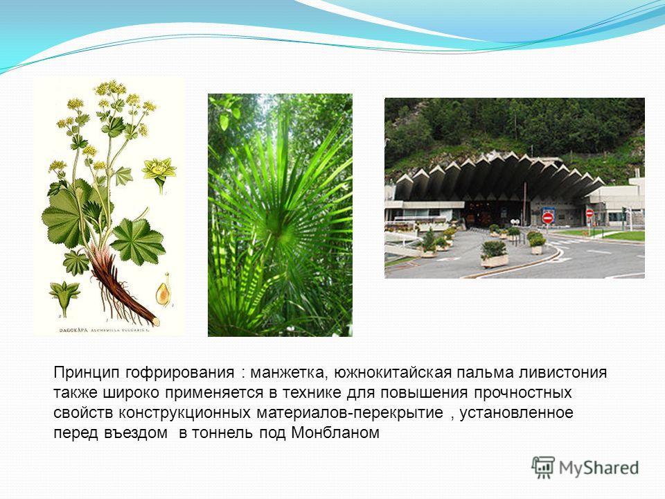 Принцип гофрирования : манжетка, южнокитайская пальма ливистония также широко применяется в технике для повышения прочностных свойств конструкционных материалов-перекрытие, установленное перед въездом в тоннель под Монбланом