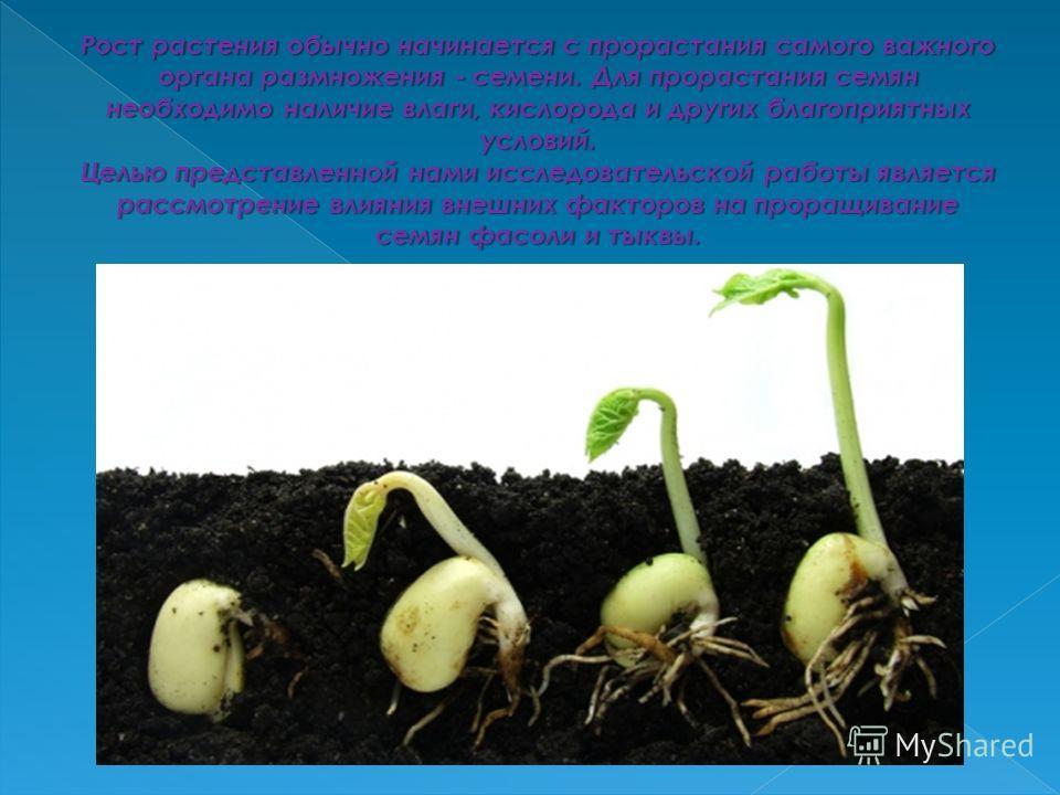 Рост растения обычно начинается с прорастания самого важного органа размножения - семени. Для прорастания семян необходимо наличие влаги, кислорода и других благоприятных условий. Целью представленной нами исследовательской работы является рассмотрен