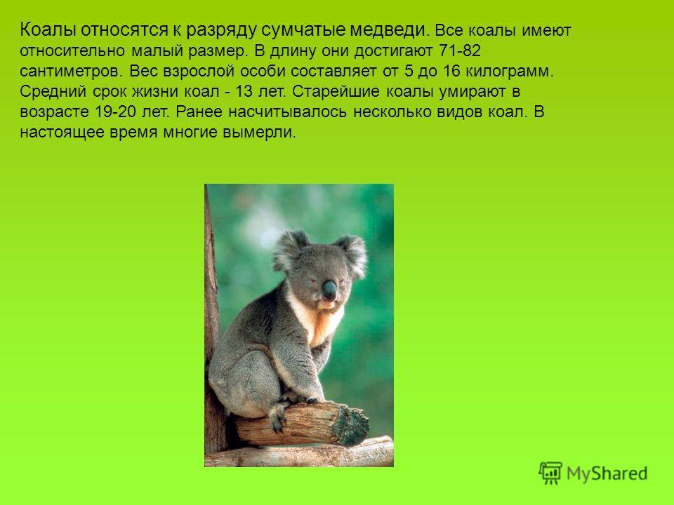 Коалы относятся к разряду сумчатые медведи. Все коалы имеют относительно малый размер. В длину они достигают 71-82 сантиметров. Вес взрослой особи составляет от 5 до 16 килограмм. Средний срок жизни коал - 13 лет. Старейшие коалы умирают в возрасте 1