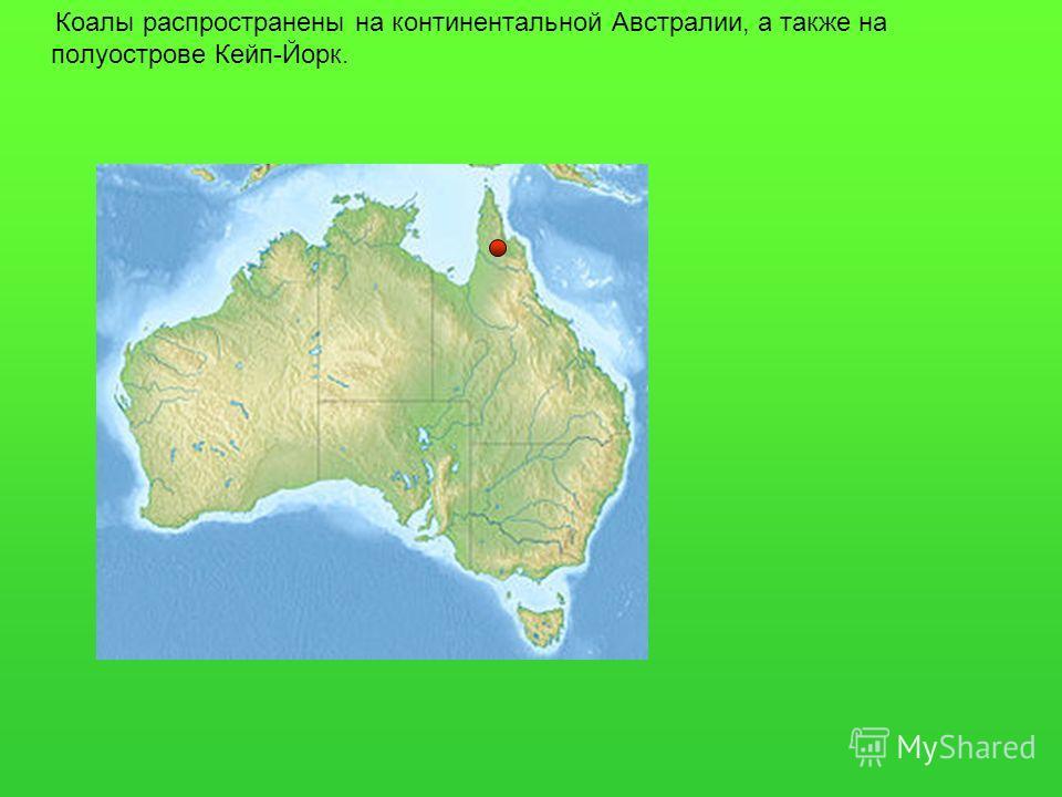Коалы распространены на континентальной Австралии, а также на полуострове Кейп-Йорк.