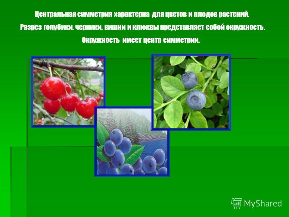 Примеры симметрий в ботанике: Центральная симметрия Осевая симметрия