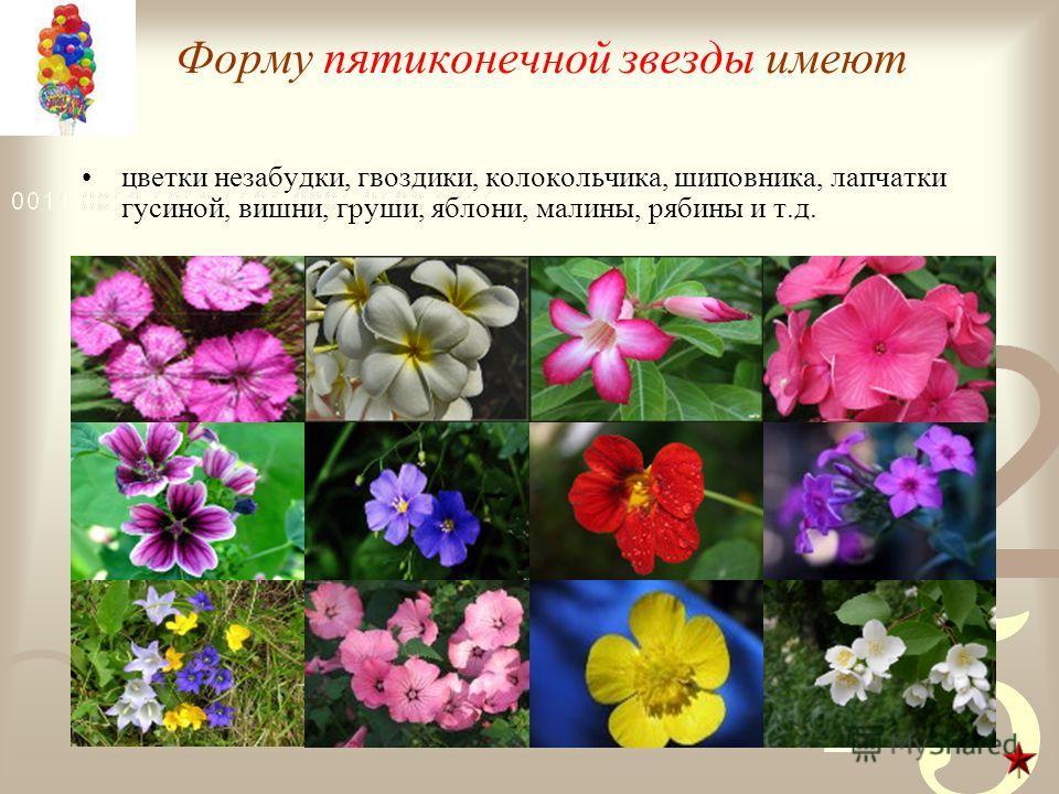 Форму пятиконечной звезды имеют цветки незабудки, гвоздики, колокольчика, шиповника, лапчатки гусиной, вишни, груши, яблони, малины, рябины и т.д.