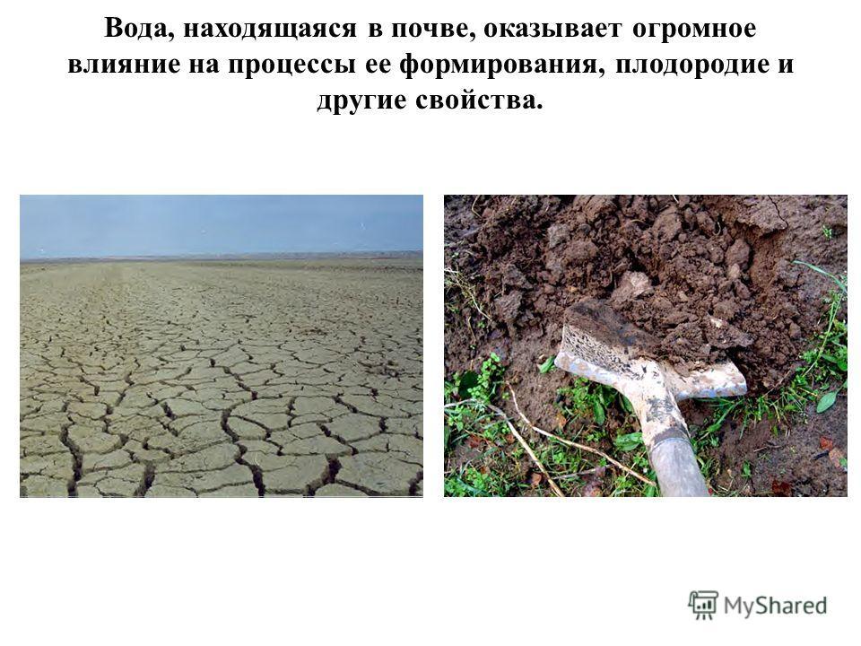 Вода, находящаяся в почве, оказывает огромное влияние на процессы ее формирования, плодородие и другие свойства.