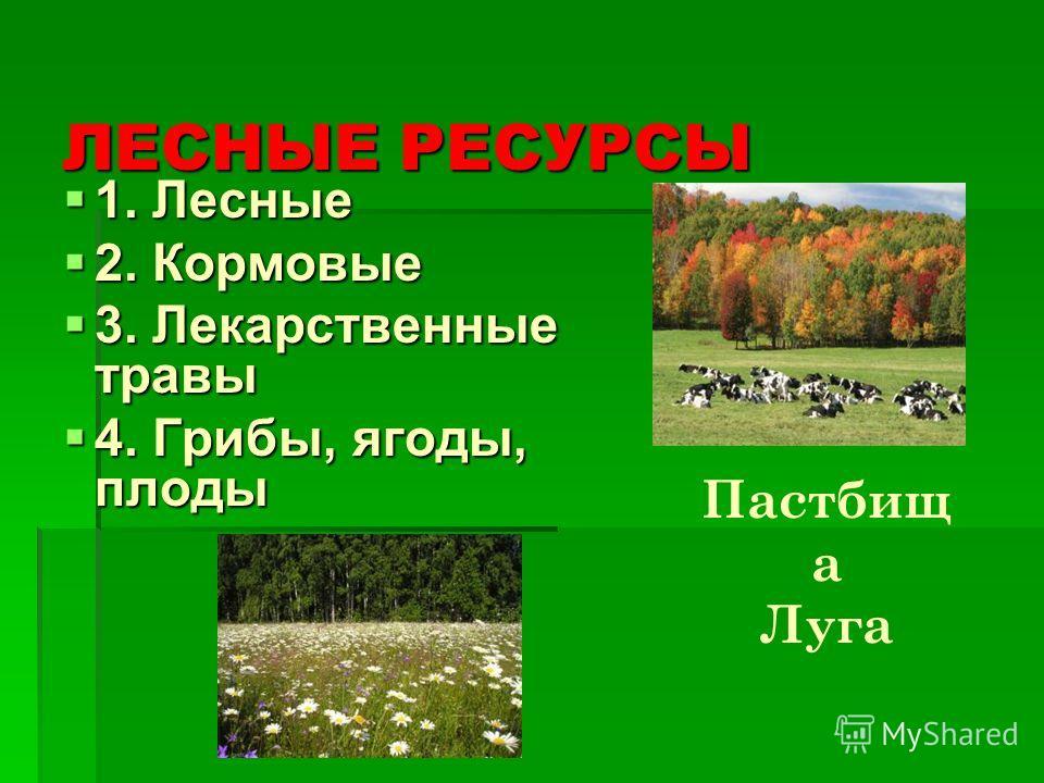 ЛЕСНЫЕ РЕСУРСЫ 1. Лесные 2. Кормовые 3. Лекарственные травы 4. Грибы, ягоды, плоды Пастбищ а Луга